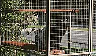 Safe and secure cat enclosures